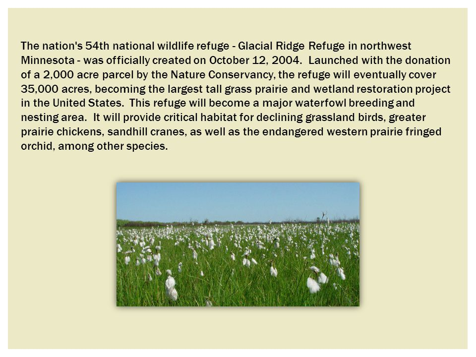 The nation s 54th national wildlife refuge - Glacial Ridge Refuge in northwest Minnesota - was officially created on October 12, 2004.