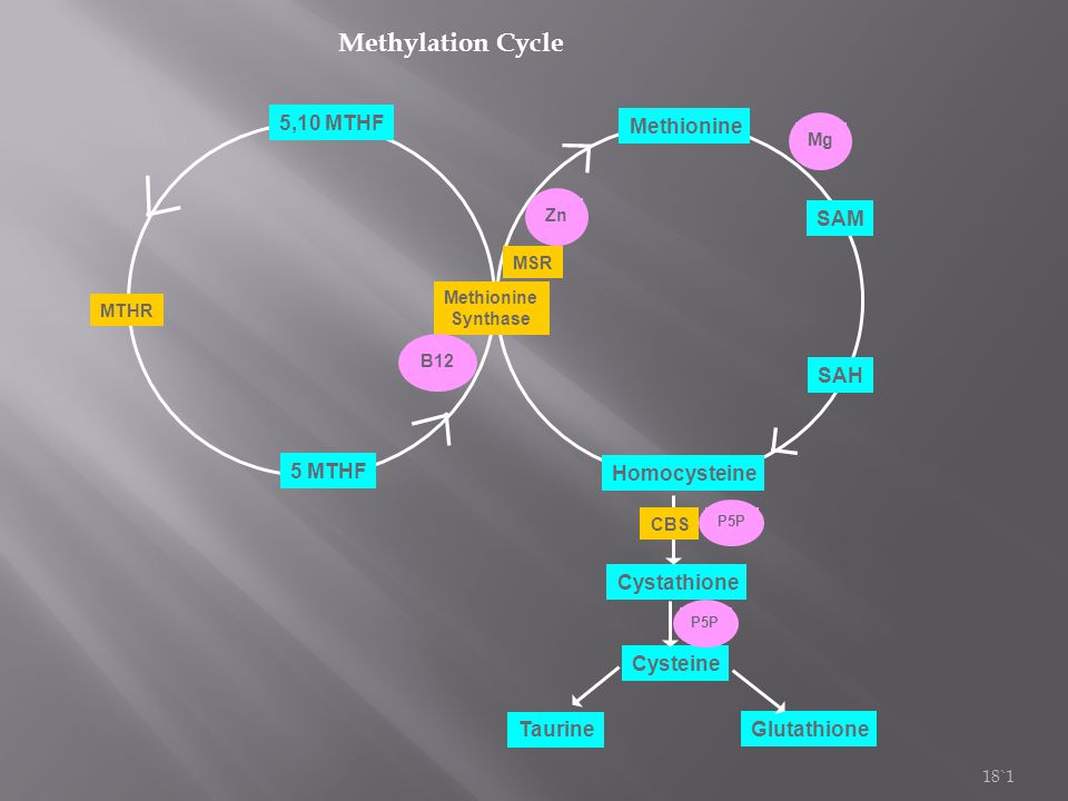 Methylation Cycle 5,10 MTHF Methionine SAM SAH 5 MTHF Homocysteine