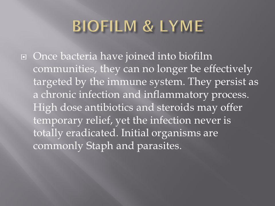 BIOFILM & LYME