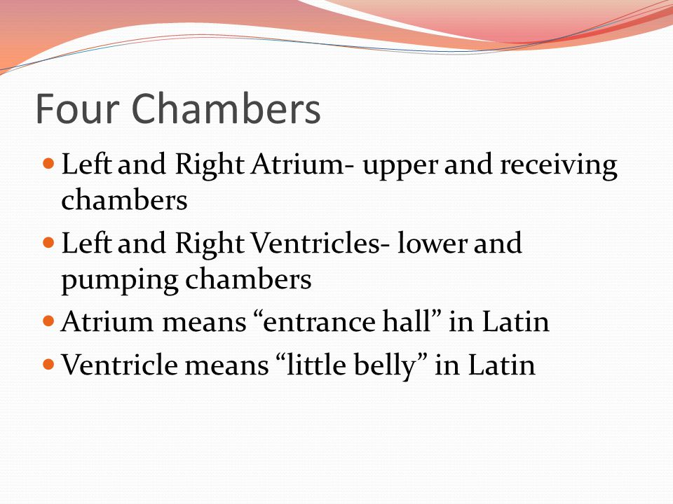 Four Chambers Left and Right Atrium- upper and receiving chambers