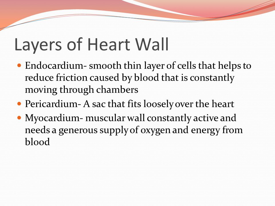 Layers of Heart Wall Endocardium- smooth thin layer of cells that helps to reduce friction caused by blood that is constantly moving through chambers.