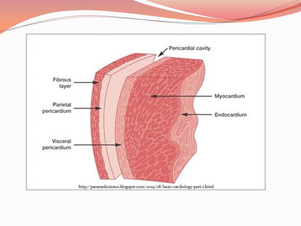 http://paramedicine101. blogspot. com/2009/08/basic-cardiology-part-i