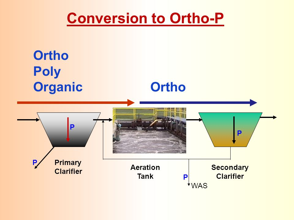 Conversion to Ortho-P Ortho Poly Organic Ortho P P Primary Clarifier