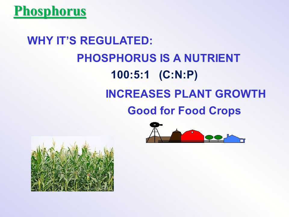 Phosphorus WHY IT'S REGULATED: PHOSPHORUS IS A NUTRIENT