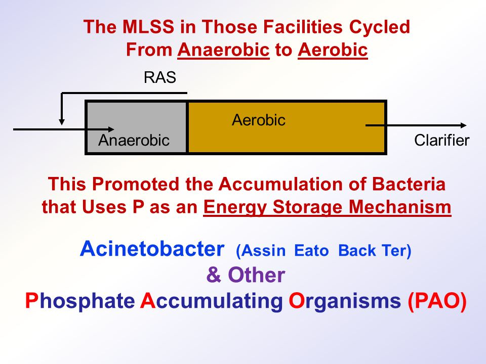 Acinetobacter (Assin Eato Back Ter) & Other