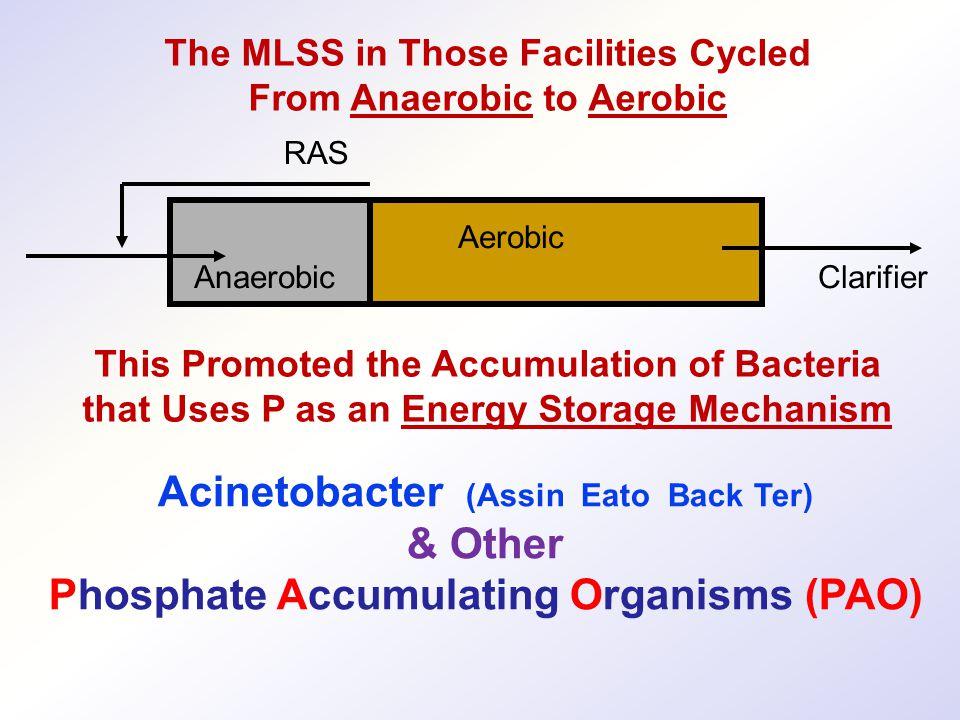 Acinetobacter (Assin Eato Back Ter) & Other