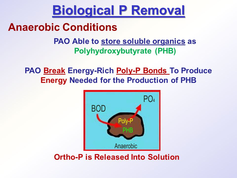 PAO Able to store soluble organics as Polyhydroxybutyrate (PHB)