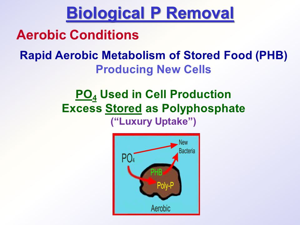 Biological P Removal Aerobic Conditions