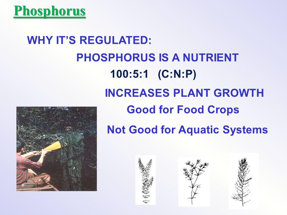 Phosphorus WHY IT'S REGULATED: PHOSPHORUS IS A NUTRIENT