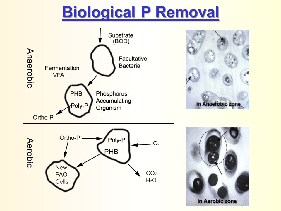 Biological P Removal