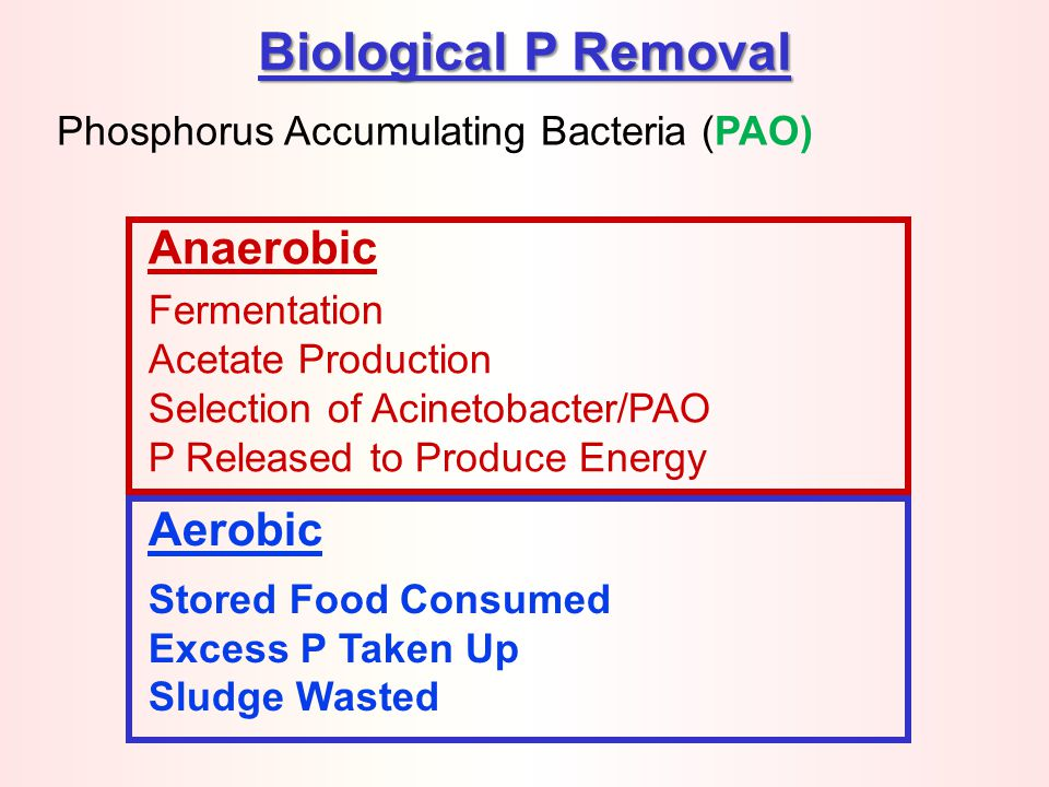 Biological P Removal Anaerobic Aerobic