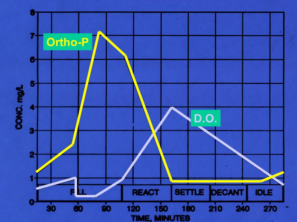Ortho-P D.O.