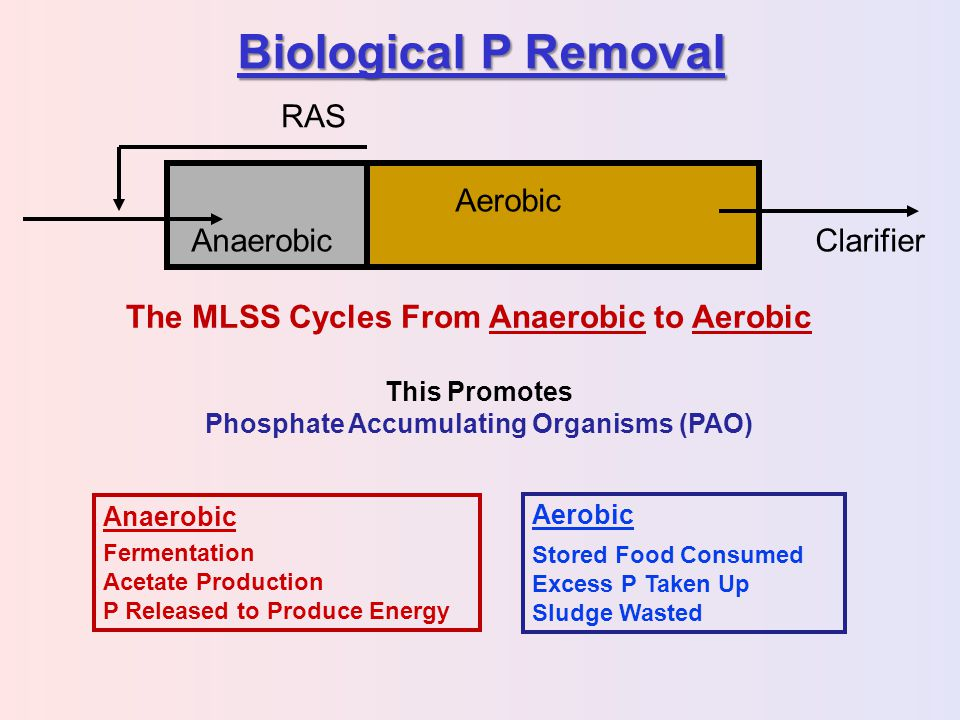 Biological P Removal RAS Anaerobic Aerobic Clarifier