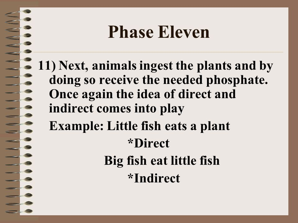Phase Eleven