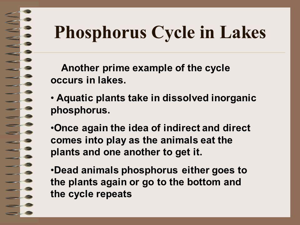Phosphorus Cycle in Lakes
