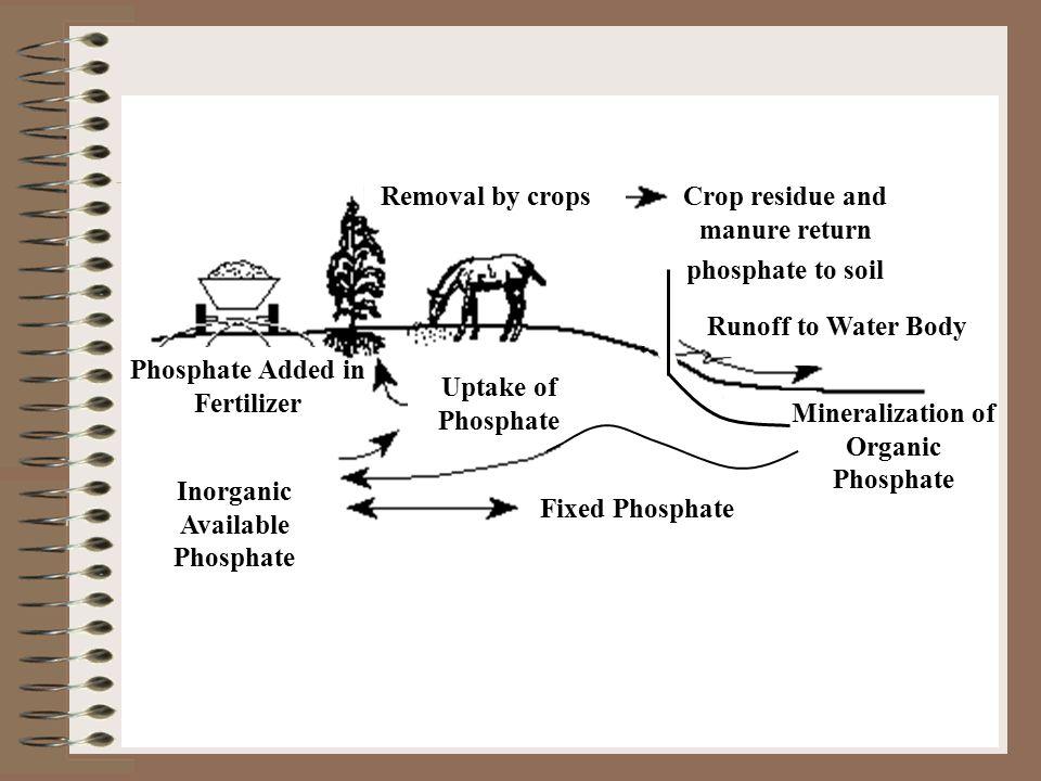 Crop residue and manure return phosphate to soil