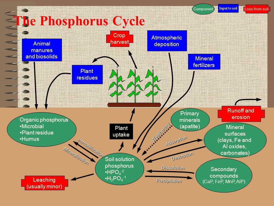 The Phosphorus Cycle Crop Atmospheric harvest deposition Animal