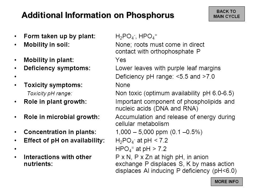 Additional Information on Phosphorus