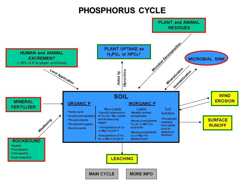 PHOSPHORUS CYCLE SOIL PLANT and ANIMAL RESIDUES