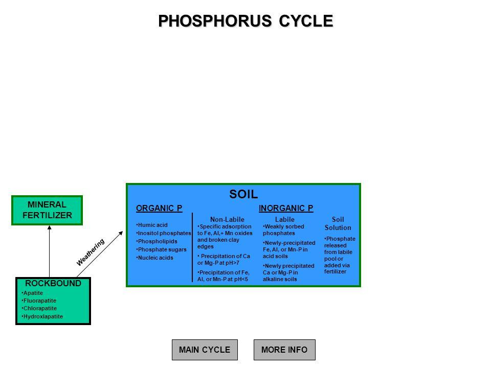 PHOSPHORUS CYCLE SOIL MINERAL FERTILIZER ROCKBOUND ORGANIC P