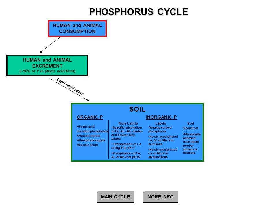 PHOSPHORUS CYCLE SOIL HUMAN and ANIMAL CONSUMPTION