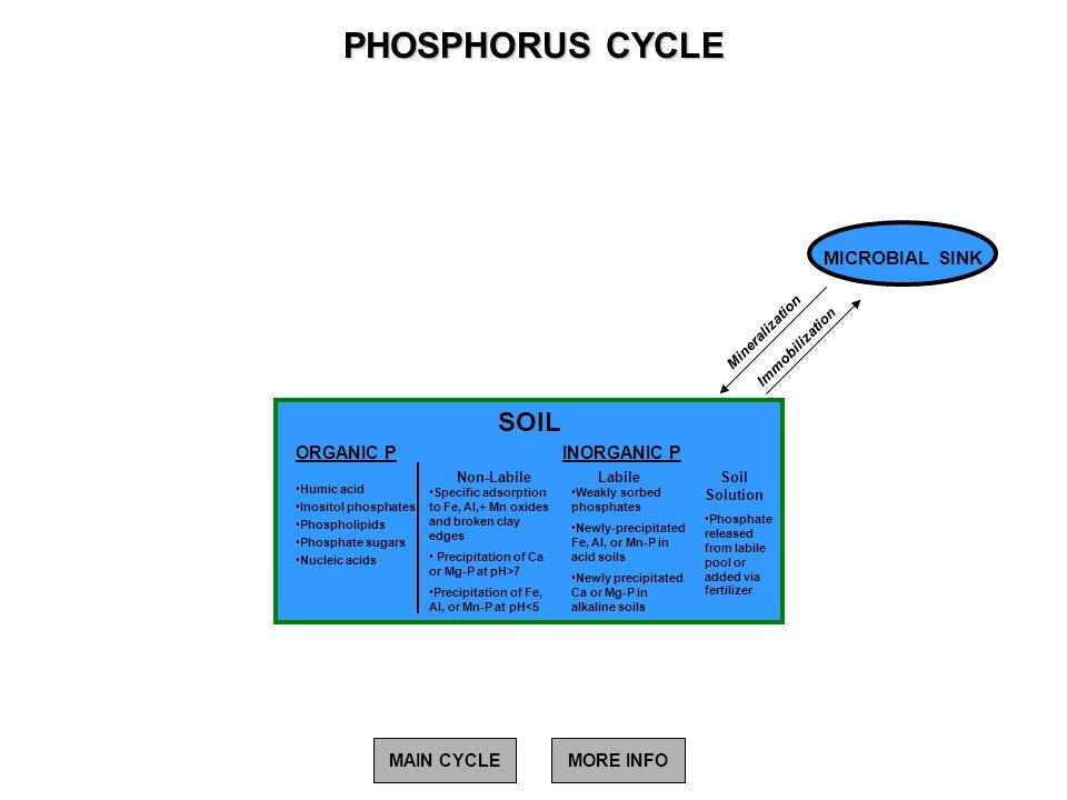 PHOSPHORUS CYCLE SOIL MICROBIAL SINK ORGANIC P INORGANIC P MAIN CYCLE