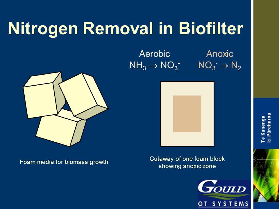 Nitrogen Removal in Biofilter