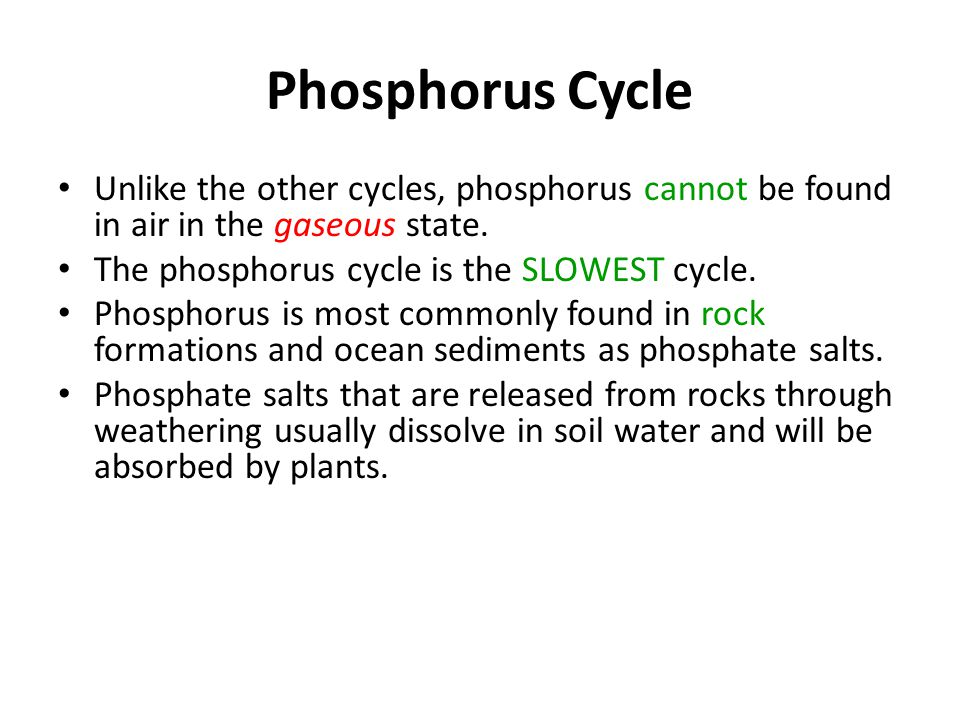 Phosphorus Cycle Unlike the other cycles, phosphorus cannot be found in air in the gaseous state. The phosphorus cycle is the SLOWEST cycle.