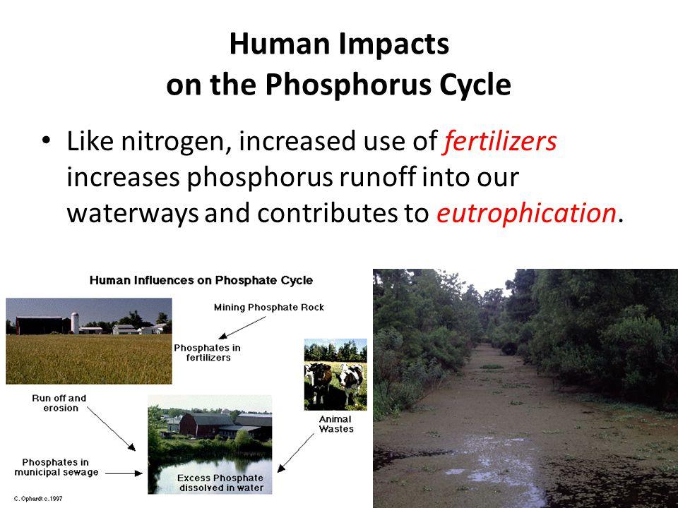 Human Impacts on the Phosphorus Cycle
