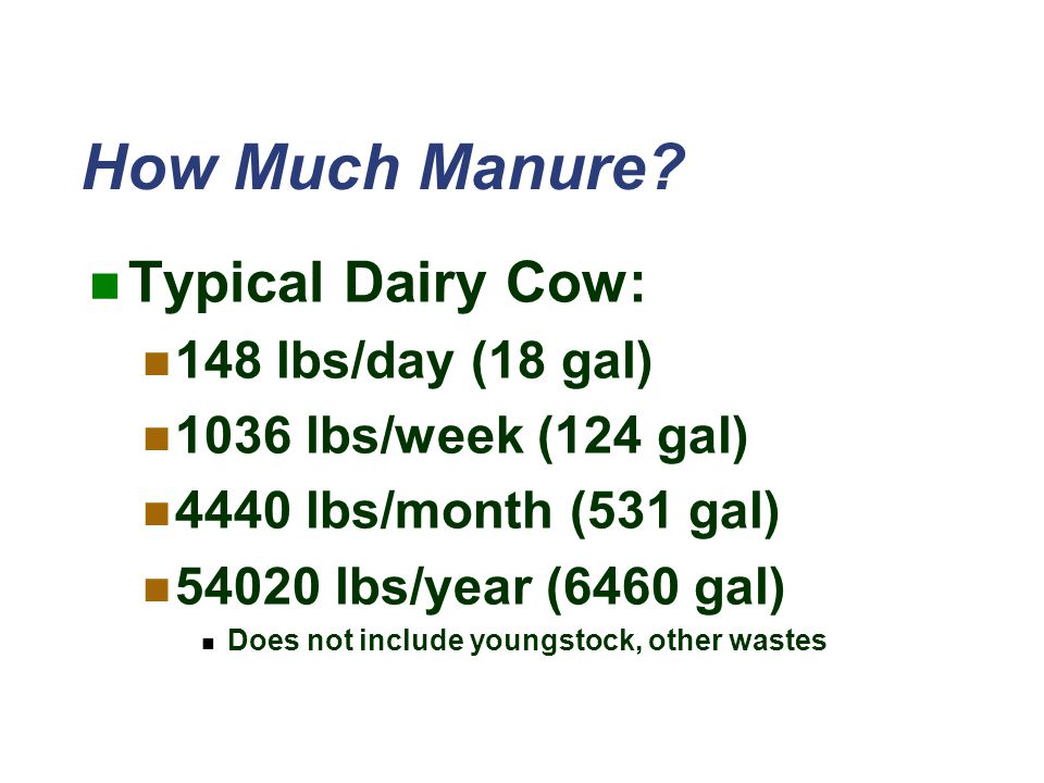 How Much Manure Typical Dairy Cow: 148 lbs/day (18 gal)