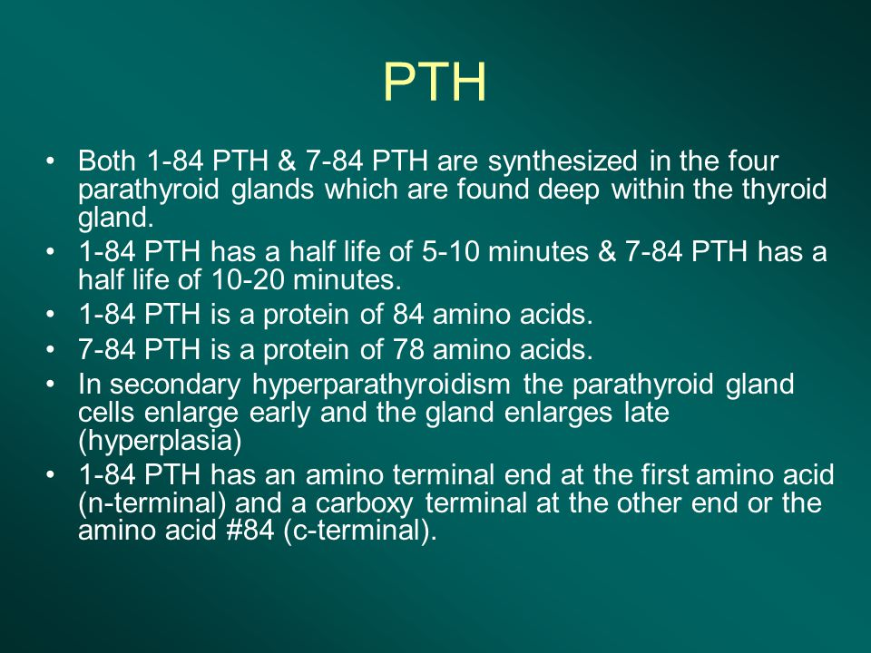 PTH Both 1-84 PTH & 7-84 PTH are synthesized in the four parathyroid glands which are found deep within the thyroid gland.