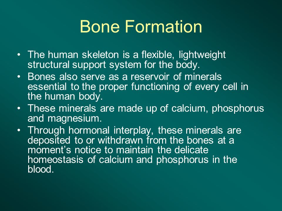 Bone Formation The human skeleton is a flexible, lightweight structural support system for the body.