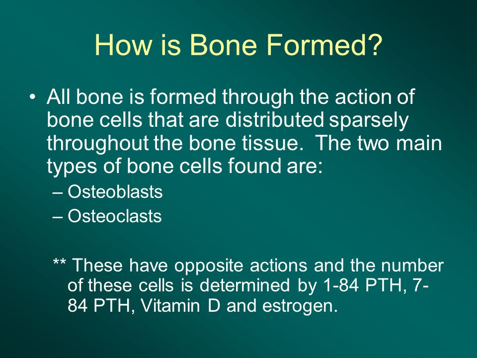 How is Bone Formed