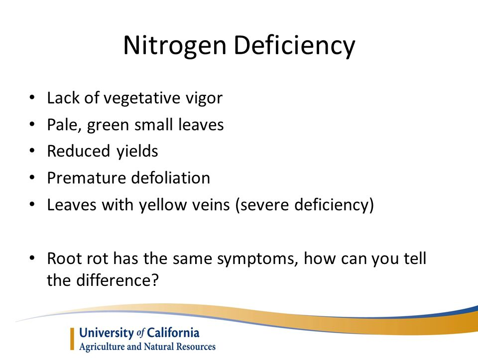 Nitrogen Deficiency Lack of vegetative vigor Pale, green small leaves
