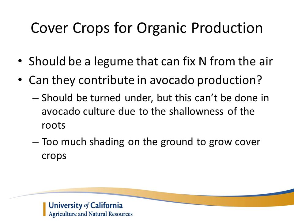 Cover Crops for Organic Production
