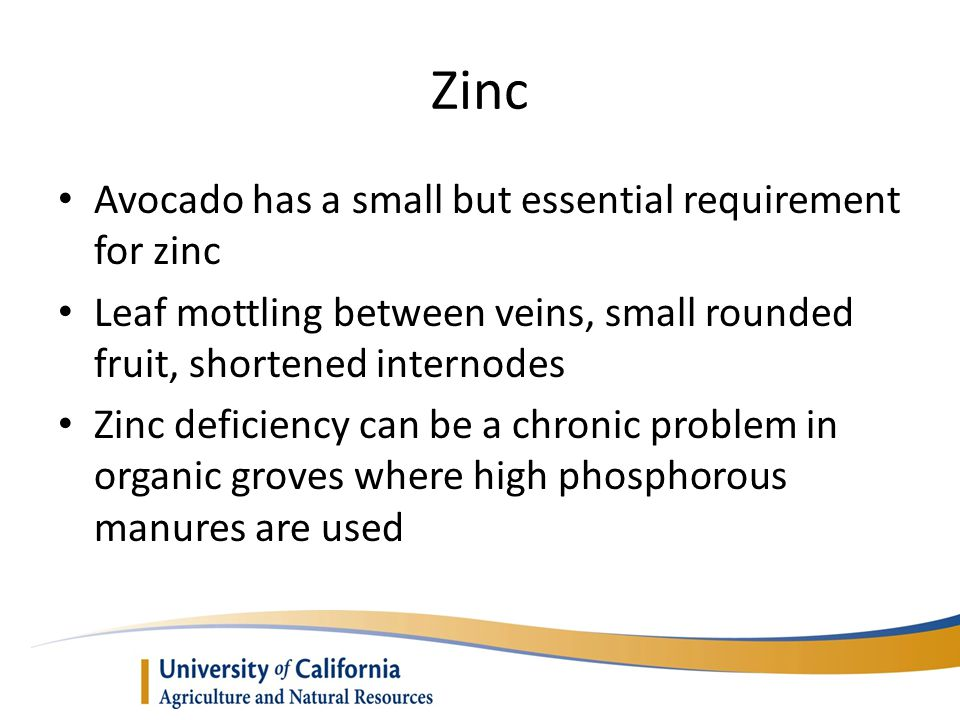 Zinc Avocado has a small but essential requirement for zinc
