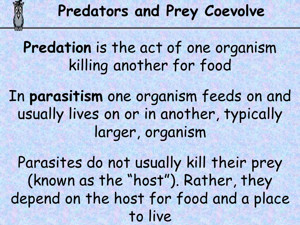 Predation is the act of one organism killing another for food