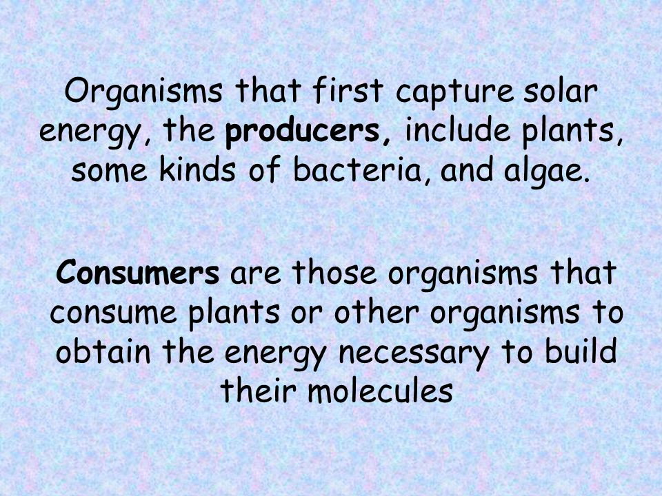 Organisms that first capture solar energy, the producers, include plants, some kinds of bacteria, and algae.