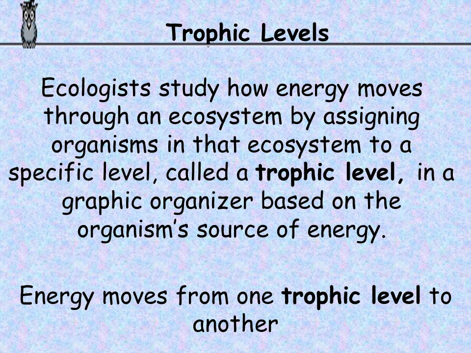 Energy moves from one trophic level to another