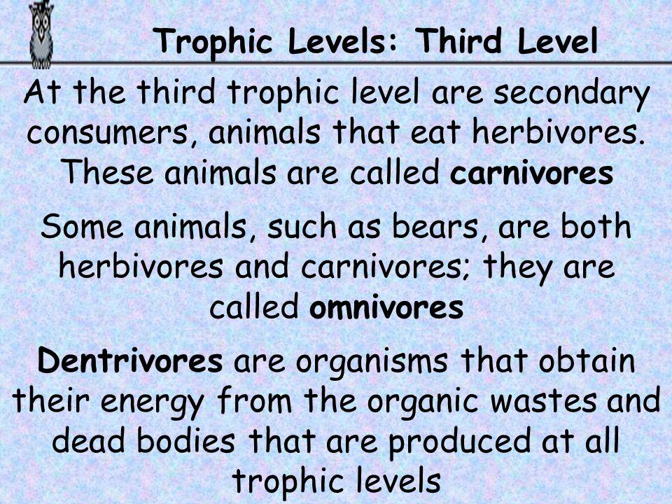 Trophic Levels: Third Level