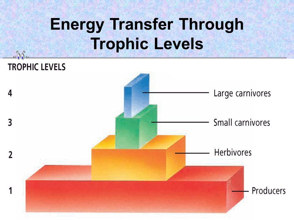 Energy Transfer Through