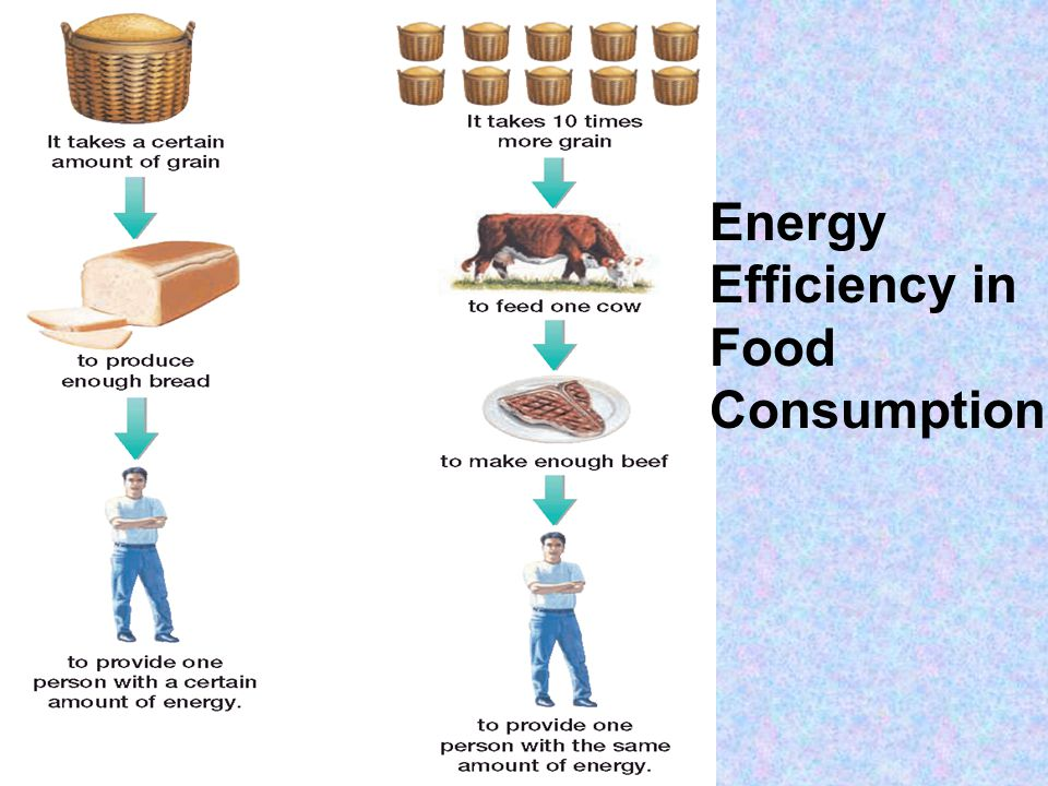 Energy Efficiency in Food Consumption