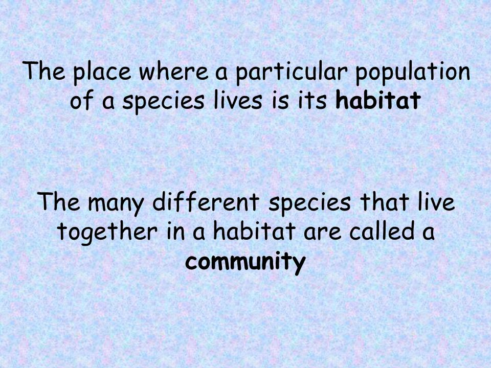The place where a particular population of a species lives is its habitat