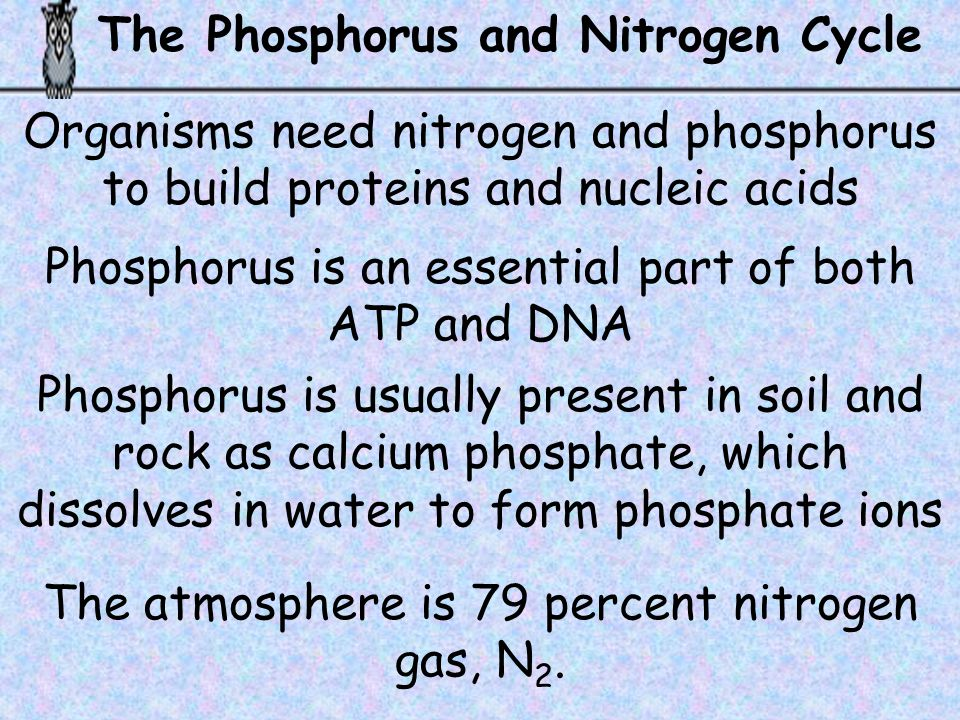 The Phosphorus and Nitrogen Cycle