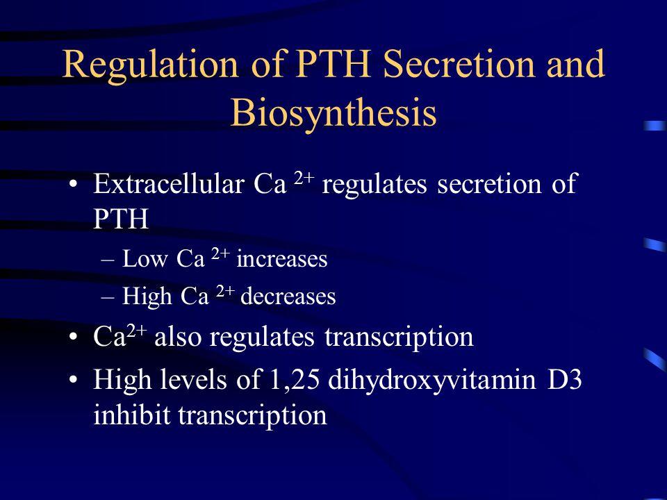 Regulation of PTH Secretion and Biosynthesis