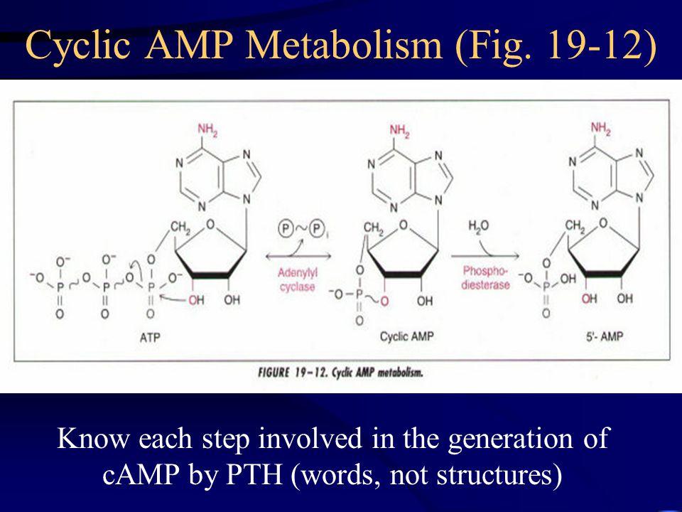 Cyclic AMP Metabolism (Fig. 19-12)