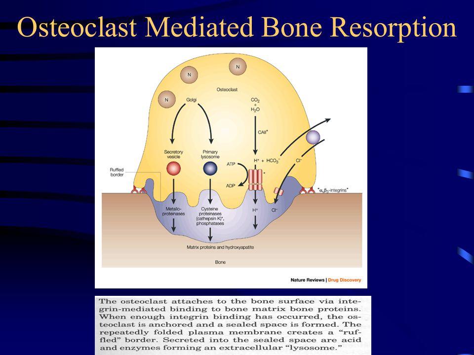 Osteoclast Mediated Bone Resorption