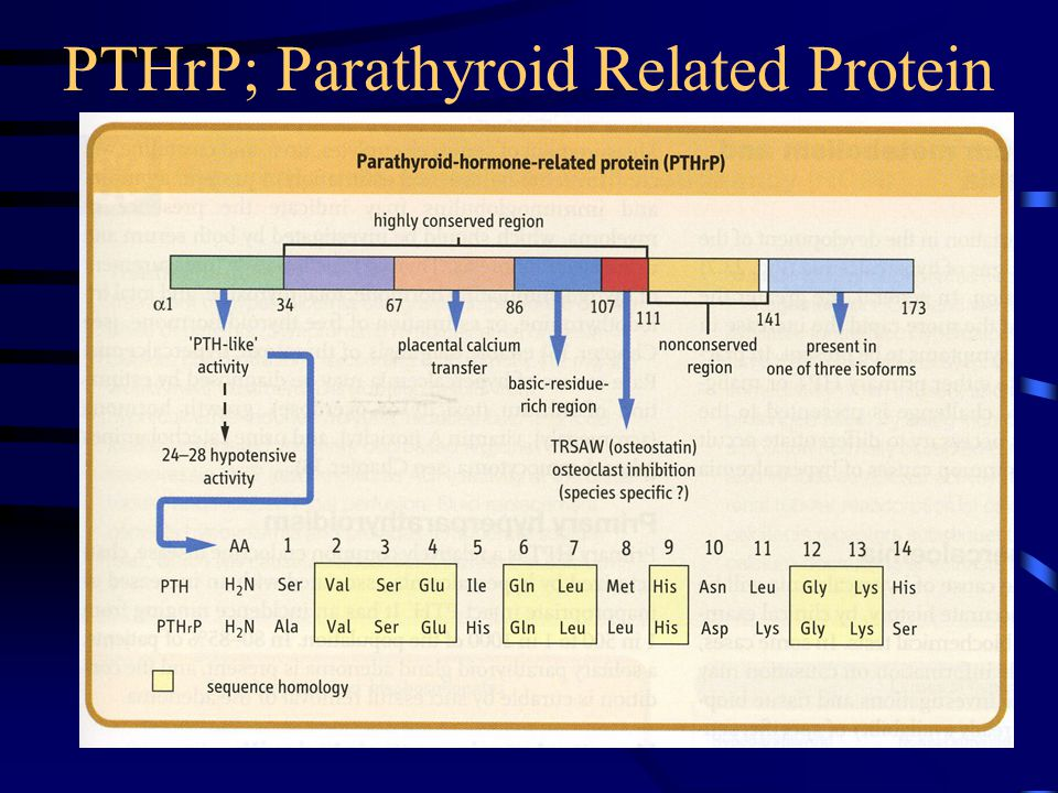 PTHrP; Parathyroid Related Protein