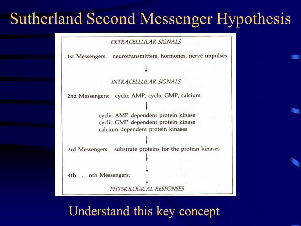 Sutherland Second Messenger Hypothesis