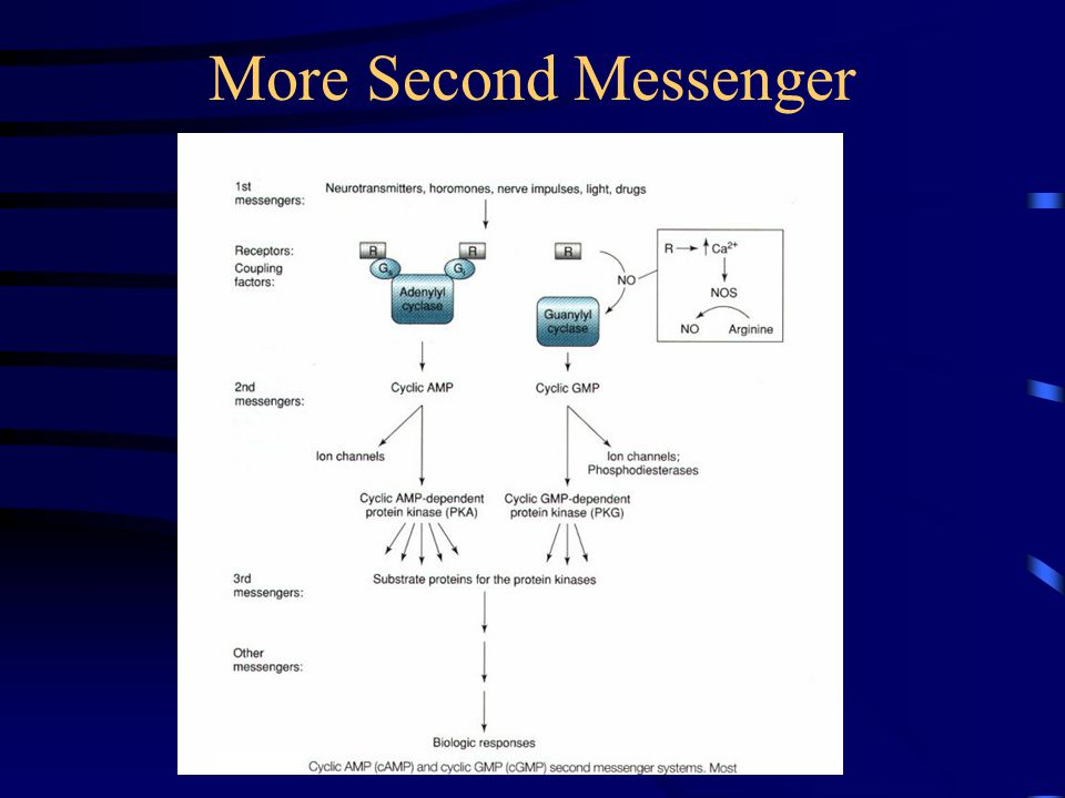 More Second Messenger